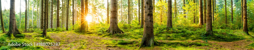 Fotobehang Meloen Panorama of a beautiful forest at sunrise