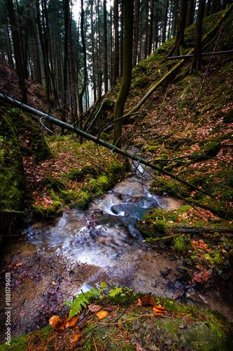 Papiers peints Rivière de la forêt creek in Saxon switzerland
