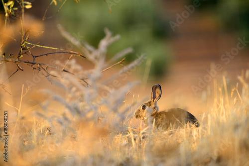 Foto Murales Attentive rabbit near the burrow.