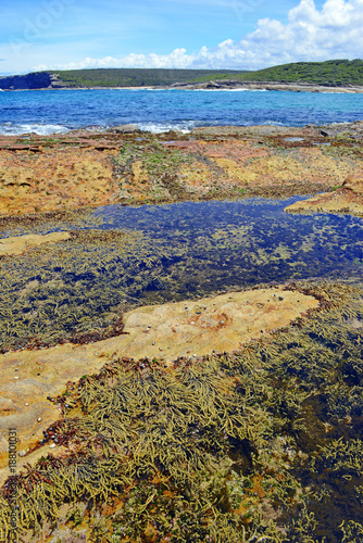 Foto op Aluminium Sydney Vibrant colors of aquatic life in rock pools and the tidal zone of rocky coastline beach in Australia
