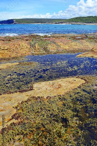 Papiers peints Sydney Vibrant colors of aquatic life in rock pools and the tidal zone of rocky coastline beach in Australia