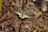 farfalla - 188101247