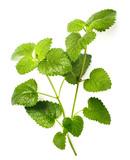 fresh lemon balm leaves isolated on white - 188105055