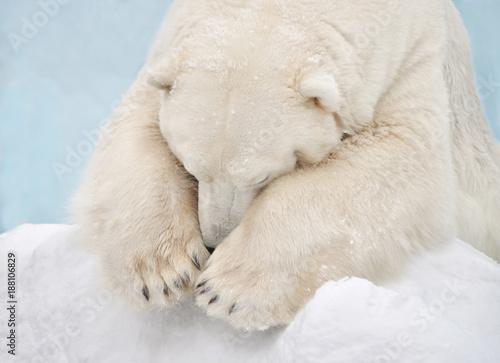 Aluminium Ijsbeer Белый медведь спит.
