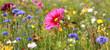 Leinwanddruck Bild - Jachère fleurie