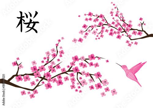 Fototapeta Vector Cherry Blossom