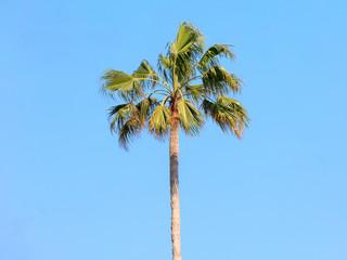 Palm on Sanibel Island against blue sky, Florida, USA