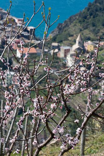 Foto op Plexiglas Liguria Early Spring Blooms Cinque Terre, Italy 2016