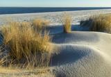 Dünenlandschaft mit Strandhafer am Ellenbogen von Sylt - 188148289