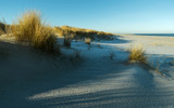 Dünenlandschaft mit Strandhafer am Ellenbogen von Sylt - 188148464