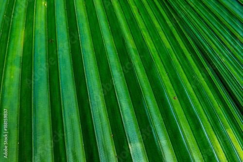 Grüne Blätter - 188159837