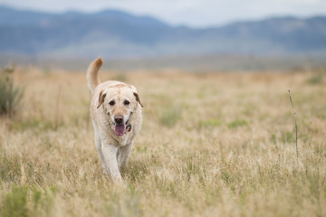 dog by the Colorado mountains