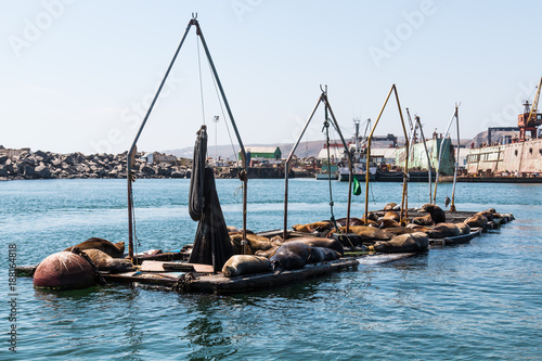Sea lions rest on docks in the Port of Ensenada.