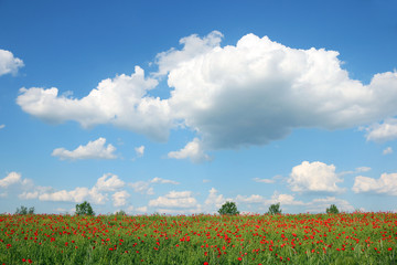 spring meadow and blue sky with clouds landscape
