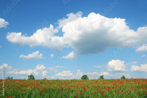 Foto Murales spring meadow and blue sky with clouds landscape