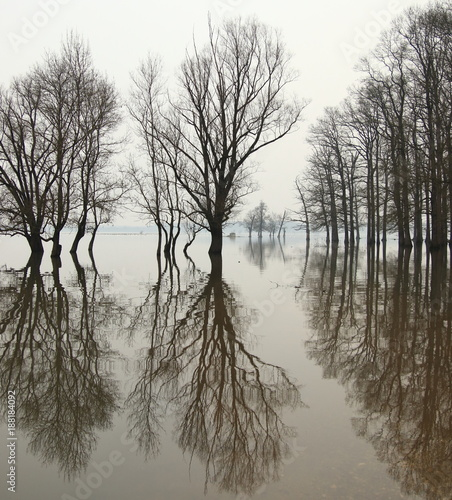 Flood in forest with trees reflection in water - 188184092