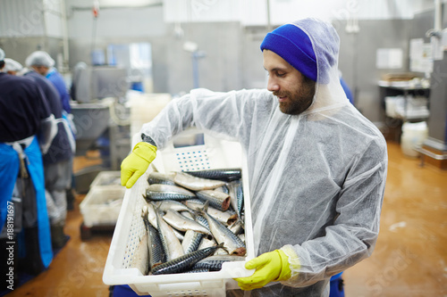 Staff of seafood produstion in coveralls looking at fresh mackerel in plastic box - 188191697