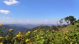 Asian mountains, UHD pan view of wind shaking flowers at kiew lom viewpoint, on a sunny autumn day, in the mountainsn near Pai, in Thailand - 188197284