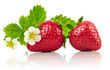 Strawberries with green leaf and flowers, isolated on white