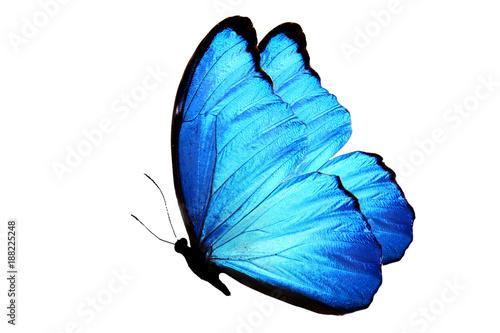 синяя бабочка изолированная на белом фоне - 188225248