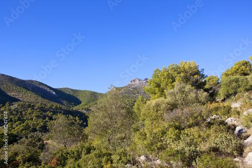 Fridge magnet spanish mountain pine woodland