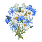 Watercolor bouquet of blue cornflowers