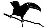 vector image of toucan birds