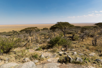 Serengeti - Savanne - Afrika
