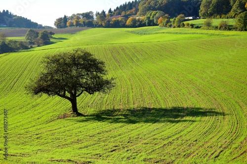 In de dag Pistache Landschaft zwischen Ursenbach und Oberflockenbach im Odenwald – Apfelbaum