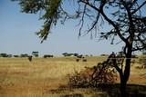 Elefanten Herde Serengeti