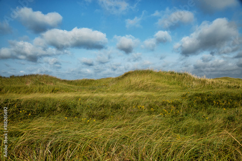 Foto Murales Grass with cloudy blue sky in background