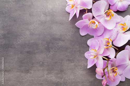Pink orchid flower on a gray textured background, space for a text. - 188286062