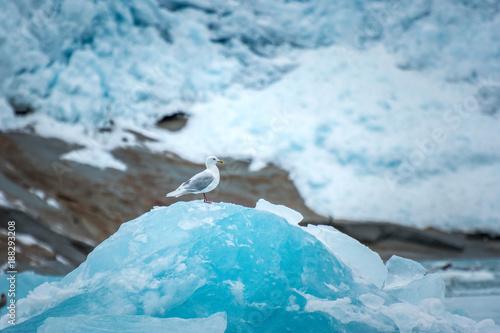 Papiers peints Antarctique single sea gull sitting on top of an iceberg