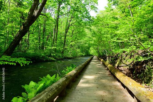 Papiers peints Route dans la forêt 奥入瀬渓流の遊歩道