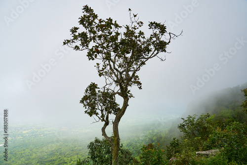 Mist on the high peaks - 188307888