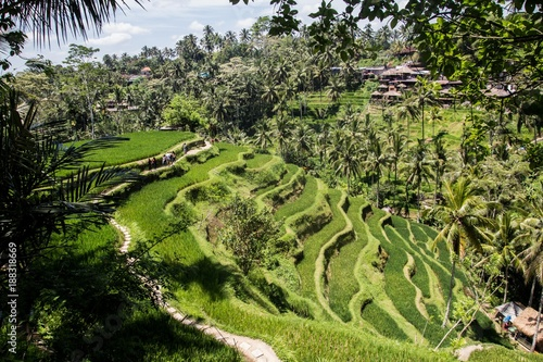 In de dag Rijstvelden Tegalalang ricefields, one of the most beautiful rice fields in Bali island.