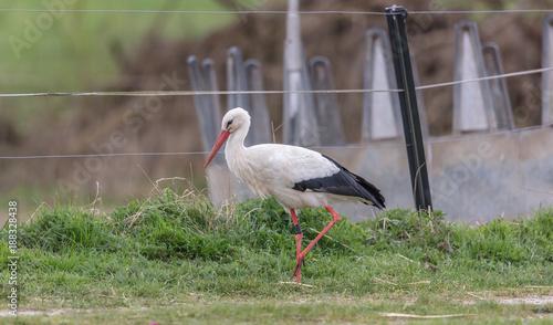 Fotobehang Kikker storch auf tour