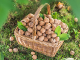 Walnut harvest. Walnuts in the basket on the green grass. - 188338687