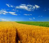Wheat field against a sky - 188350620