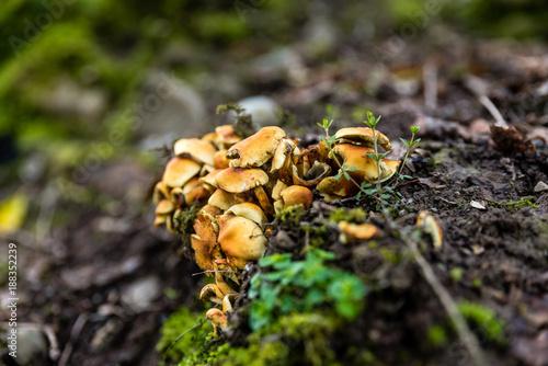 Foto op Canvas Natuur Welsh Mushrooms