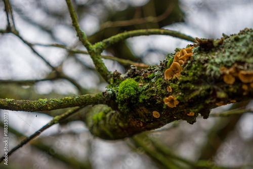 Keuken foto achterwand Natuur Moss on tree