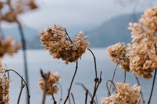 Keuken foto achterwand Natuur Dried flowers, abstract background