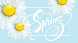 Calligraphic inscription Hello Spring with spring flower - blooming white daisy. Vector illustration