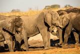 Botswana, wild elephants at sunset near the Okavango Delta, Africa