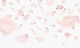 Pink sakura falling petals background. Vector illustration - 188381445