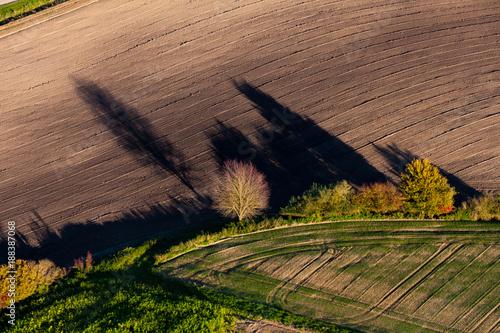 Foto Murales Schattenstrukturen von Bäumen