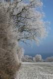 zauberhafte Winterlandschaft - 188416486
