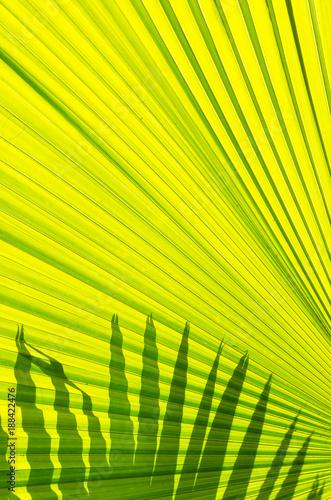 Art of dark Shadow on the green leaf - 188422476