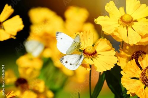 Foto Murales Sommerblumen und Schmetterlinge
