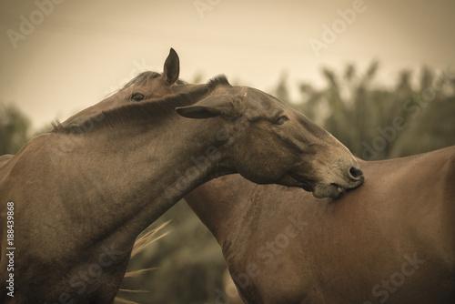 Foto Murales caballos